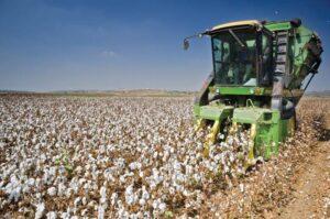 mechanized cotton farming