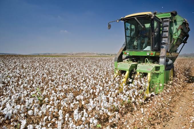 cotton farming in Nigeria
